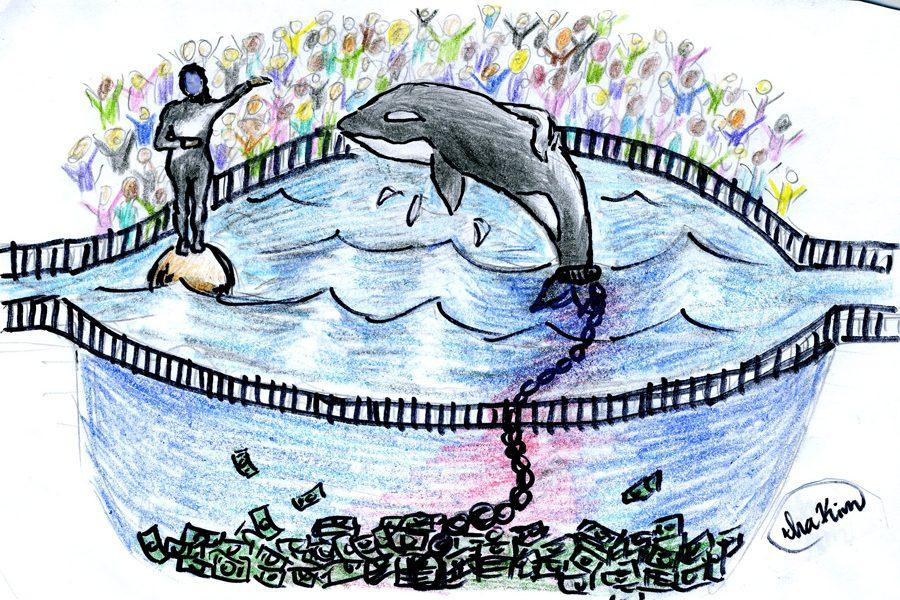 Seaworld+claims+they+%E2%80%9Crescue%E2%80%9D+animals+but+they+do+quite+the+opposite.+They+steal+animals+from+their+natural+habitat%2C+from+their+family+and+loved+ones%2C+confine+them+causing+psychological+damage%2C+and+deprive+them+of+food+in+order+to+make+money.