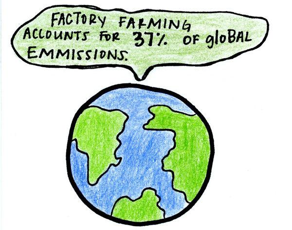97 percent of egg laying hens in the United States are factory farmed and 99.9 percent of chickens used for slaughter are factory farmed.