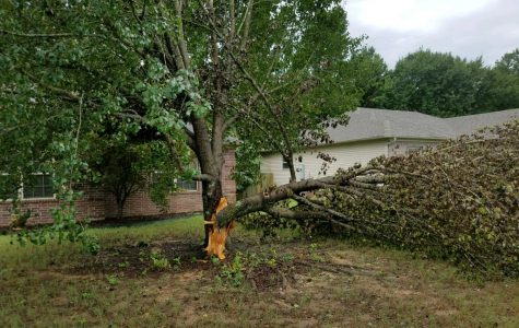 A storm caused by the passing of Hurricane Laura splits a large tree open in Lonoke County.